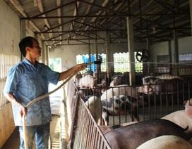 Nam Định: Lão nông kiếm hàng trăm triệu đồng từ nuôi lợn bằng thảo dược