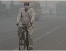 Vitamin B có thể bảo vệ chống ô nhiễm không khí