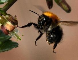 Thuốc trừ sâu diệt sâu bọ nhưng lại thân thiện với côn trùng có lợi