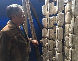 Lão nông thu tiền tỷ mỗi năm nhờ trồng nấm