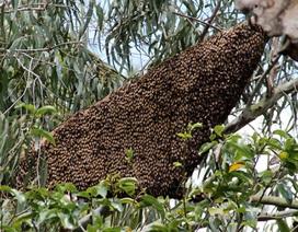 Nguy kịch sau khi bị ong dữ đốt nốt duy nhất