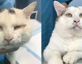 Con mèo hoang gây sốt khi thực hiện ca phẫu thuật cắt mí mắt