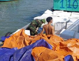 Phát hiện bè gỗ vận chuyển gần 50 nghìn con cá rô phi giống nhập lậu từ Trung Quốc