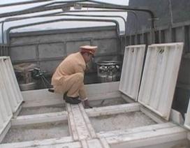 Phát hiện vụ vận chuyển 6.000 con cá song giống không rõ nguồn gốc