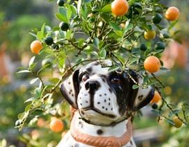 Độc đáo quất cảnh trên lưng chó cho dịp Tết Mậu Tuất