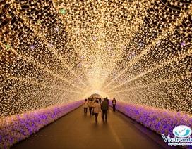 4 nơi nên đến vào mùa anh đào Nhật Bản