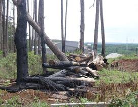 Kiểm tra vụ mua bán đất rừng liên quan đến người nhà nguyên Giám đốc Công an tỉnh