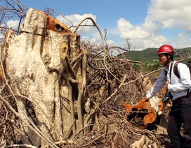 Mượn dự án rừng Flitch để chặt phá rừng tự nhiên