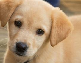 Bị lừa hàng ngàn USD vì mua thú cưng qua mạng