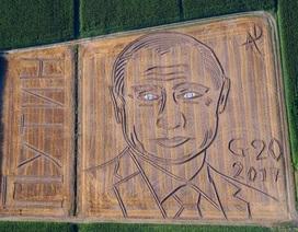 """Chân dung Tổng thống Putin """"vẽ"""" bằng máy cày trên cánh đồng Italy"""