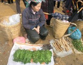 Đặc sản rau rừng Tây Bắc đắt hơn cả thịt cá