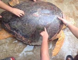 Rùa quý hiếm mắc lưới ngư dân được thả về biển