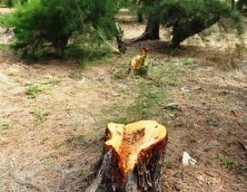 Kỷ luật nhiều cá nhân, tập thể vì phá rừng phòng hộ