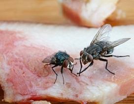 Sẽ thế nào khi ruồi đậu lên thức ăn?