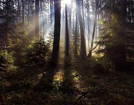 Xuất bản 100 truyện ngắn khi 1.000 cây cổ thụ tròn… 100 tuổi