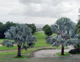 Chiêm ngưỡng những sân golf tuyệt đẹp tại Khao Yai, Nakhon Ratchasima