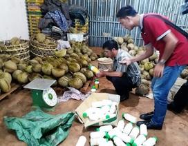 Bắt quả tang cơ sở làm chín sầu riêng bằng phân bón lá
