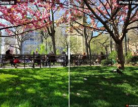 """So sánh """"sức mạnh"""" camera trên Galaxy S8 và iPhone 7+"""