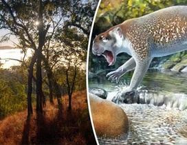 Hóa thạch sư tử có túi bị tuyệt chủng đã được tìm thấy ở Úc
