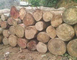 Yêu cầu kiểm điểm tập thể, cá nhân để xảy ra phá rừng trái phép