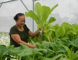 Cụ bà U70 rời phố về làng mở trang trại trồng rau sạch