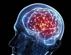 Phát hiện ra các gene quy định trí thông minh ở con người