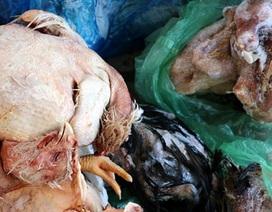 Đột nhập kho đông lạnh, gom gần 1,2 tấn thực phẩm hôi thối