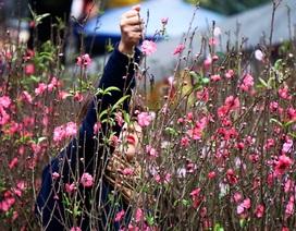 Chợ hoa lâu đời nhất Hà Nội ngày cận Tết