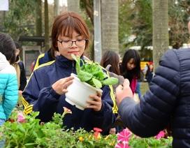 Sinh viên tổ chức đổi giấy vụn lấy cây cảnh