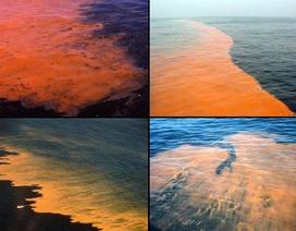 """Vén màn bí mật """"thủy triều máu"""" lan rộng trên biển Baltic"""