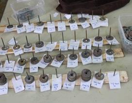 Phát hiện 8kg tiền xu cổ trong Vườn quốc gia Vũ Quang