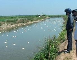 Phát hiện và tiêu huỷ đàn vịt hơn 6.500 con nhiễm cúm A/H5N6