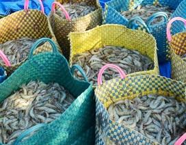Phạt hành chính 2 người Trung Quốc thu mua thủy sản trái phép