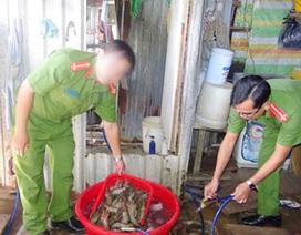 Phát hiện 17kg tôm sú bơm tạp chất chờ xuất khẩu sang Trung Quốc