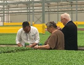 Tổng thống Israel ăn thử rau sạch ngay tại nông trường Vĩnh Phúc