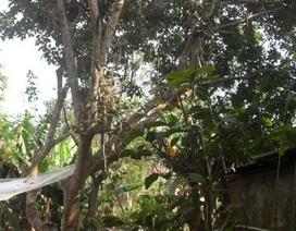 Điều tra cái chết của nam thanh niên treo cổ trên cành cây