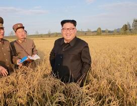 Ông Kim Jong-un tươi cười thăm nông trại giữa lúc căng thẳng