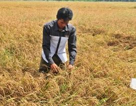 Xài tiền của người trồng lúa… cả chục cán bộ bị kỷ luật