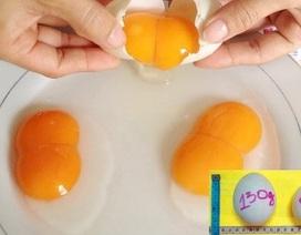Trứng hai lòng đỏ có thực sự bổ?