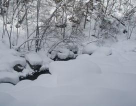 Lở tuyết ở Nhật Bản, 8 người có thể đã chết, 30 người bị thương