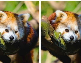 Đáp án thử tài tinh mắt: Đố bạn phát hiện điểm khác nhau giữa hai bức tranh