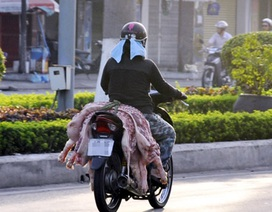 Nghiêm cấm giết mổ động vật chết, mắc bệnh để sử dụng làm thực phẩm