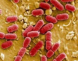 Kháng kháng sinh ở Việt Nam cao nhất thế giới