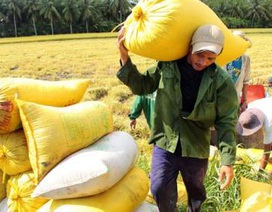 """Mất vốn, âm vốn chủ sở hữu, các """"ông lớn"""" nông nghiệp kêu khó cổ phần hóa"""