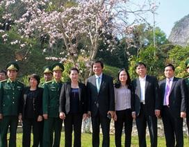 Chủ tịch Quốc hội gợi ý Điện Biên làm du lịch từ cây hoa ban
