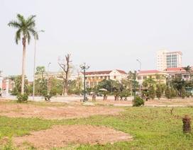 """Thái Bình di chuyển hàng loạt cây """"khủng"""", dân ngỡ ngàng"""