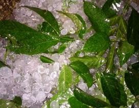Mưa đá ở Thanh Hóa, Lào Cai