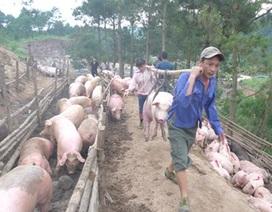 """Cảnh báo """"nền kinh tế gia công"""" đang chuyển sang nông nghiệp"""