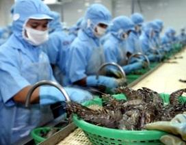 Bộ Công Thương đề nghị Úc sớm bãi bỏ lệnh tạm ngừng nhập khẩu tôm
