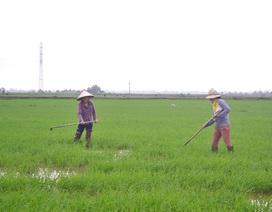 Quảng Trị: Gác chuyện vui xuân, người dân khẩn trương làm việc